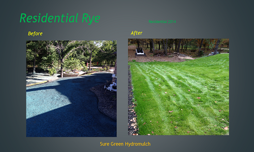 Winter hydromulch with Rye & Bermuda