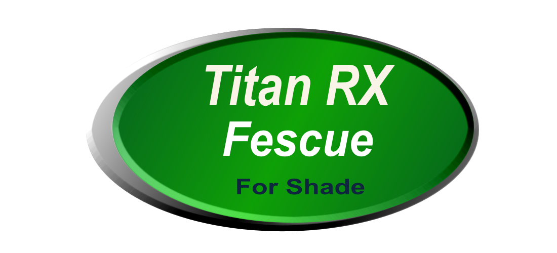 Titan RX Fescue For Shaded Areas, Prices, Quotes, Bids